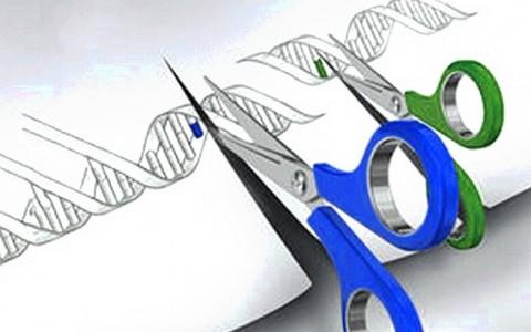 """La """"superedición"""" de genes se usa por primera vez en pacientes con cáncer"""