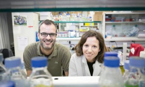 Investigadores españoles descubren cómo las células tumorales desarrollan la metástasis y una forma de evitarlo