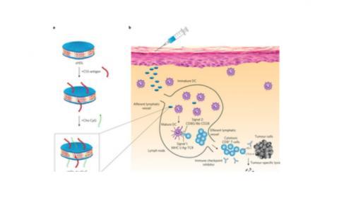 Investigadores estadounidenses diseñan nanodiscos para aplicar terapias personalizadas en cáncer