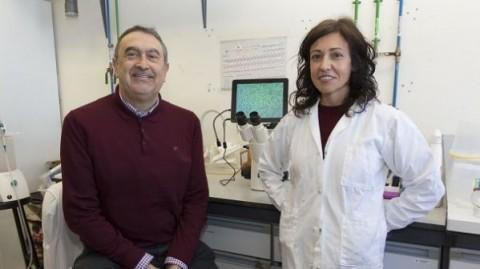 En células de mama y colon nuevos compuestos muestran potente actividad antitumoral