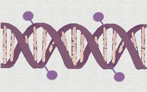 Metilación del ADN como biomarcador para el diagnóstico y pronóstico del cáncer