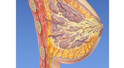 Cáncer de mama y ovario, hitos del congreso ESMO 2018