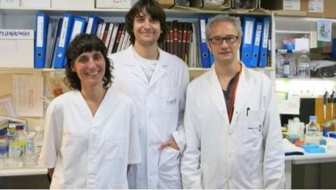Nueva diana terapéutica para luchar contra la metástasis en cáncer de ovario