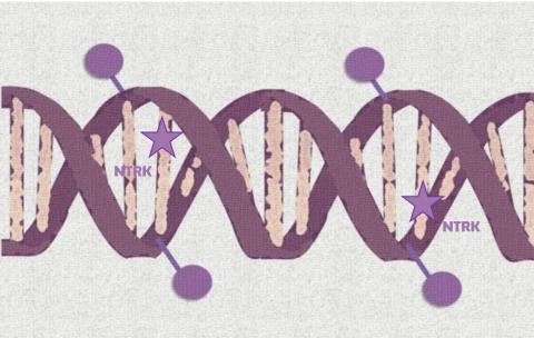 Nuevo fármaco dirigido eficaz en pacientes con distintos tipos de cáncer