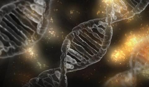 Nuevo marcador genético relacionado con la inmunoterapia en cáncer gástrico