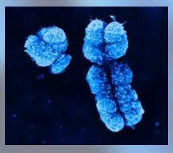 La gran complejidad genética del cáncer.